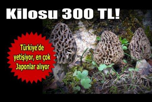 Kilosu 300 lira