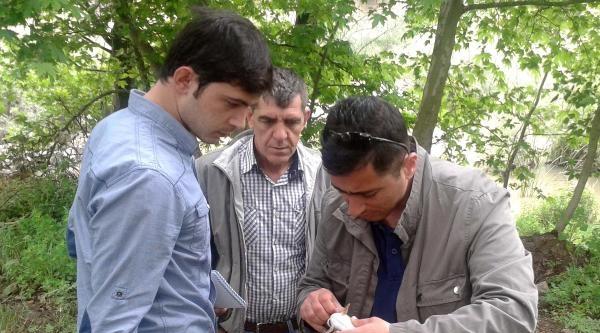 Kocabaş Çayi'nda Toplu Balık Ölümü (2)