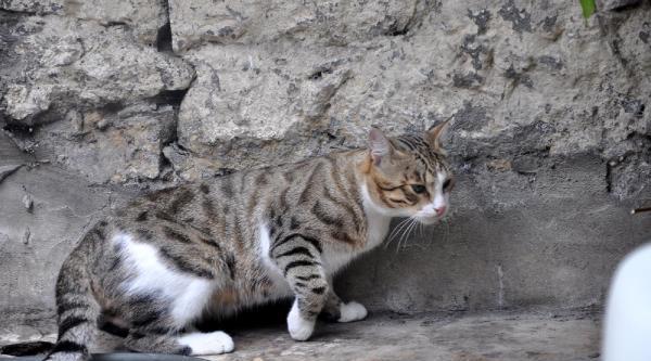 Komşuların Kedi Kavgası Karakolda Bitti