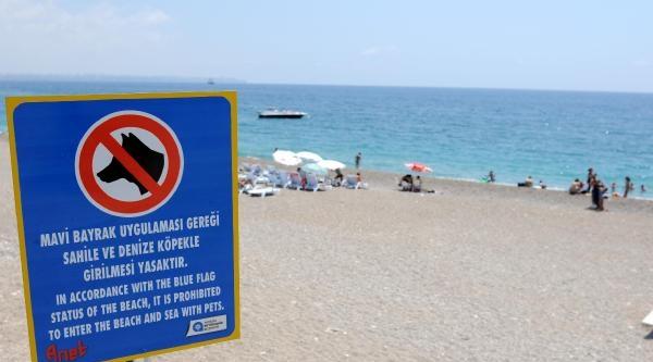 Konyaaltı Plajı'nda Dondan Sonra Köpek De Yasak