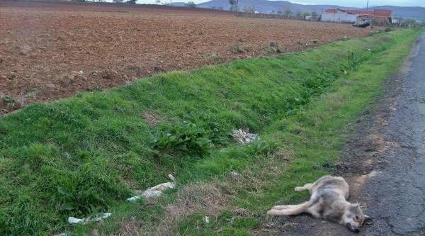 Köpeğe Çarpan Otomobil Takla Atti, Sürücü Yaralandi