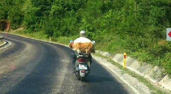 Köpeğin Motosiklet Yolculuğu