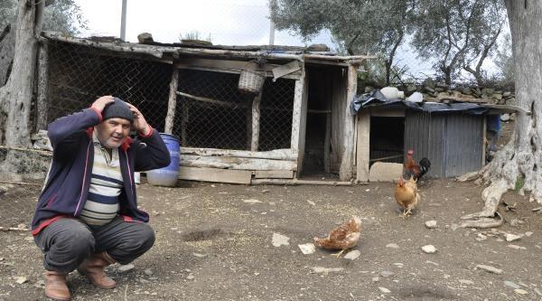Köpeğini Öldürüp, Tavuklarını Çaldilar