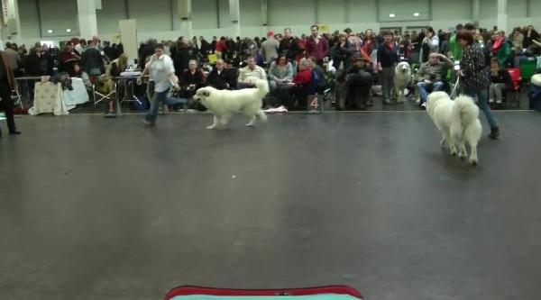 Köpek Fuarinda Kangallara Büyük Ilgi