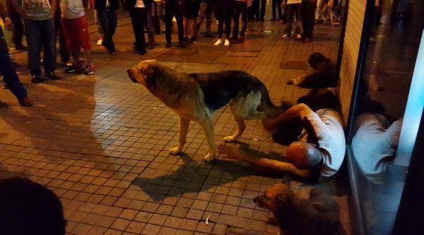 Köpeklerin Uyuyan Sahiplerini Savunması