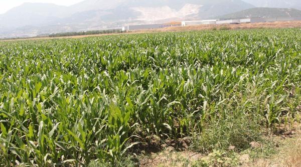 Köylü Osb'ye Karşı Arazilerine Sahip Çikti
