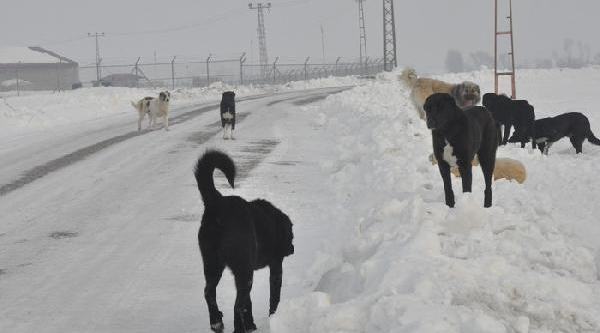 Kuduz At Nedeniyle Belde Karantinaya Alindi (2)