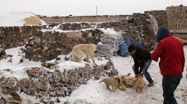Kuduz Köpeğin Isirdiği Berat Toprağa Verildi