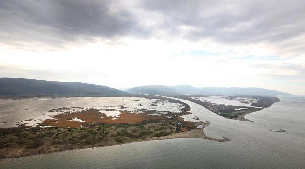 Kuraklık, Uluabat Deltası'nda Kuş Türünü Artırdı