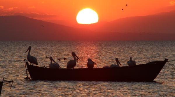 Kuş Cenneti'nde, Pelikanli Gün Batimi
