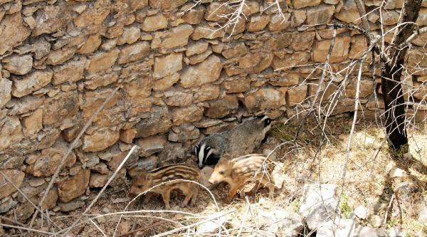 Kuyuya Düşen Hayvanları İtfaiye Kurtardı