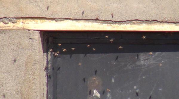Mahalleyi Basan Arılara Basınçlı Su İle Müdahale