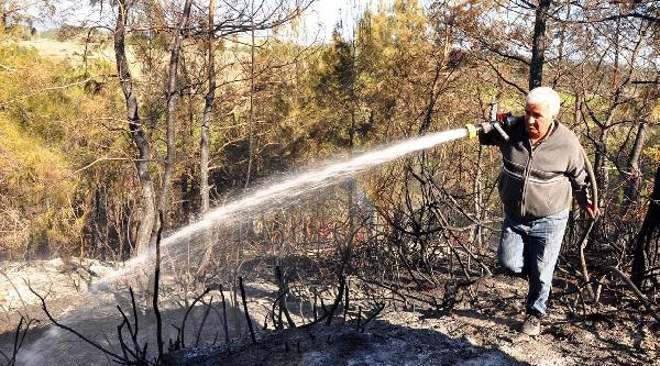 Manavgat'ta 5 Dönüm Kızılçam Ormanı Yandı