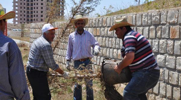 Mardin Belediyesi'nden Erdoğan'ın Adının Verildiği Parkı Kurtarma Çalişmasi