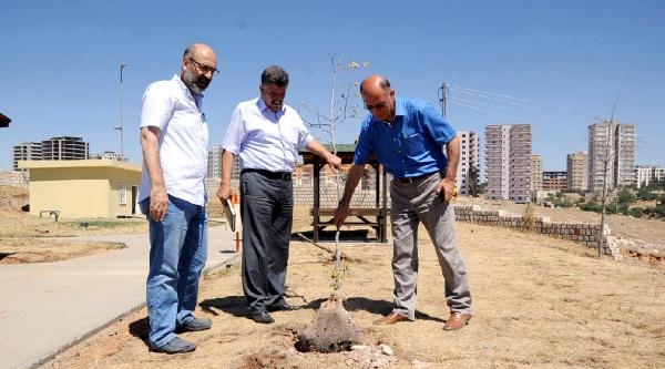 Mardin'deki 'recep Tayyip Erdoğan Parkı' Suya Kavuşuyor