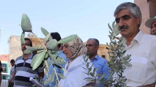 Mazlum- Der Üyelerinden Zeytin Dalı İle Barış Çağrisi
