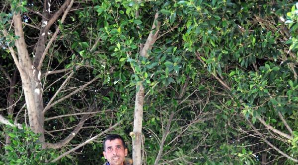 'memleketime Gidemiyorum' Diyerek Ağaca Çikti