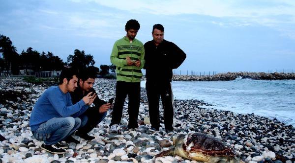 Mersin Sahiline Ölü 2 Deniz Kaplumbağası Vurdu