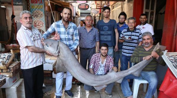 Mersin'de 2.5 Metrelik Köpek Balığı Yakalandı