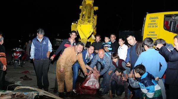 Mersin'de 4 Metrelik Köpekbalığı Yakalandı