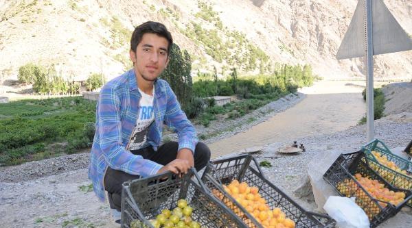 Meyve Satarak Aile Bütçesine Katkıda Bulunuyor