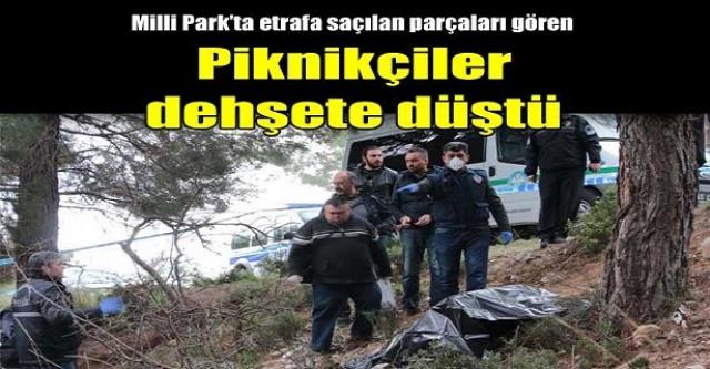 Milli parkta piknikçileri şoke eden dehşet!