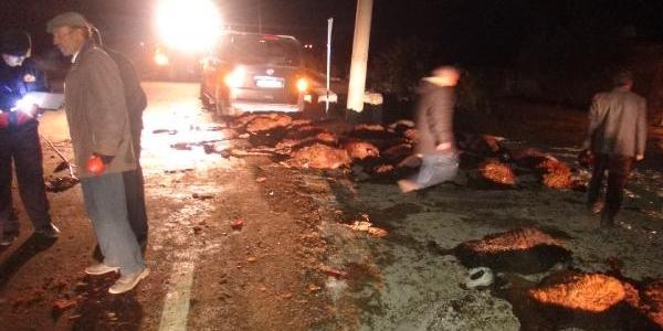 Minibüs, Koyun Sürüsüne Daldi: 3 Kişi Yaraladi