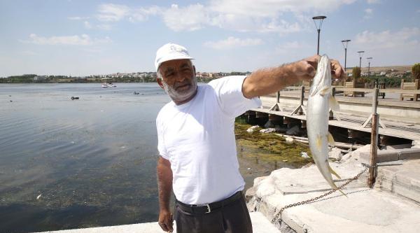 Mogan Gölü'nde Balık Ölümleri Başladı
