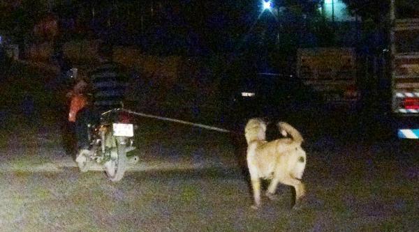Motosiklete Bağlanan Köpeğe İşkence