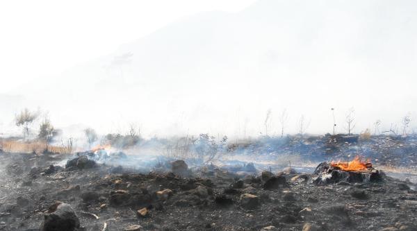 Muğla'da Orman Yangını