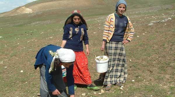 Muşlu Kadın Ekmeğini Dağdan Çikariyor