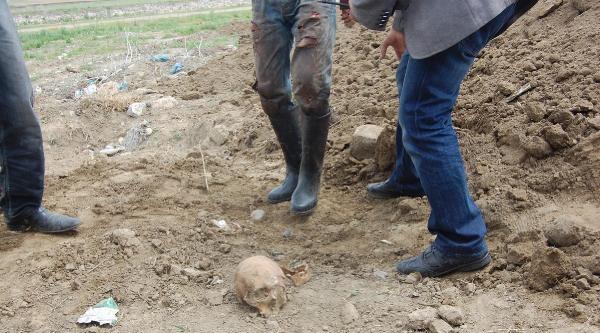 Muş'ta İnşaat Kazısında Kadın Kafatası Bulundu