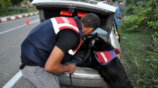 Narkotik Köpeği 'dalga' Bartın'da Göreve Başladı