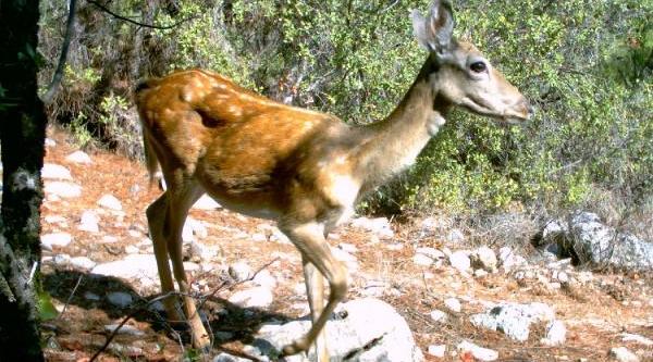 Nesli Tehlike Altindaki Hayvanlar Gps Ile Takip Ediliyor