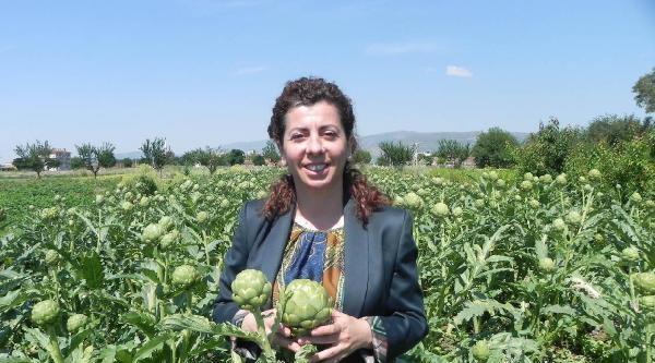 Ödemiş Patatesine Alternatif Ürün; Enginar