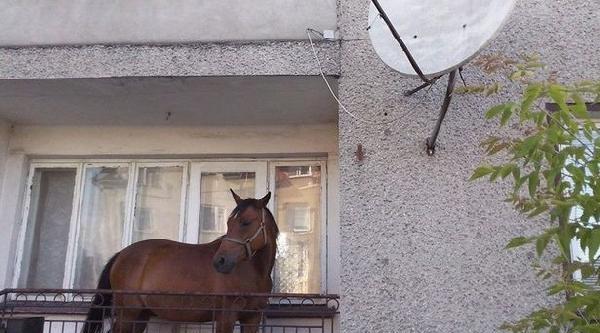 Ödünç Atı Çalinmasin Diye Balkonda Tuttu