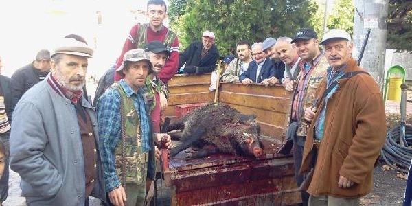 Orhangazili Avcilar 250 Kiloluk Yaban Domuz Vurdu