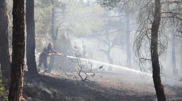 Ormanda Çikan Yangın Büyümeden Söndürüldü