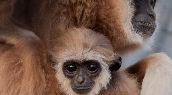 Para Bulunamazsa Hayvanat Bahçesindeki 600 Hayvan Öldürülecek