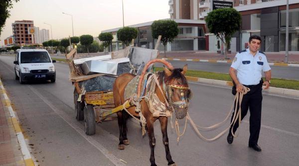 Polis, El Koyduğu At İnat Edince Çekiciyle Götürdü