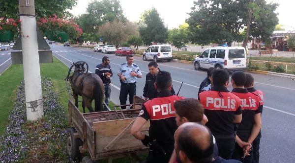 Polis Sireninden Ürken At Trafiği Birbirine Kattı