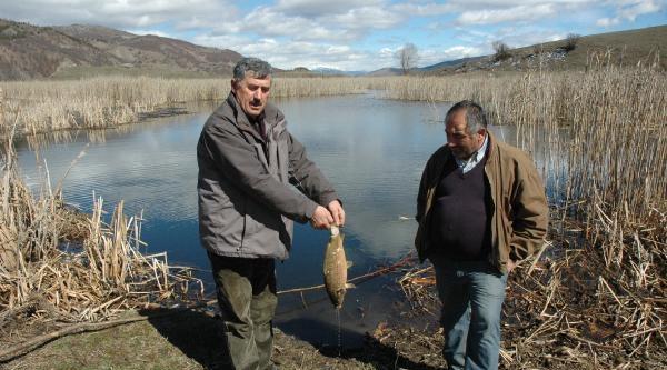 Posof'ta Toplu Balık Ölümü
