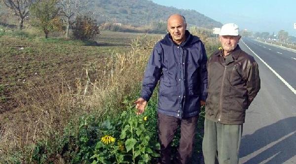 Prof.dr. Çetin: Küresel Ekolojik Kaos Yaklaşiyor