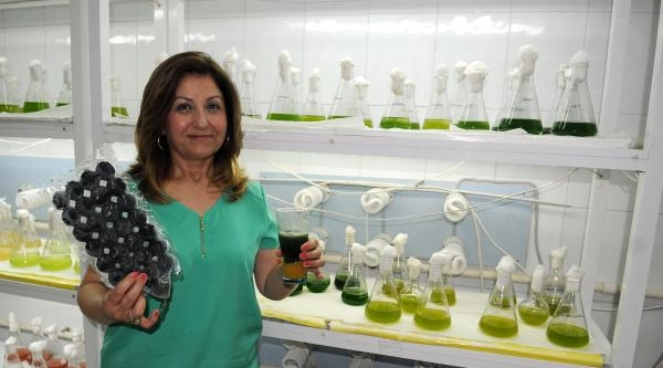 Prof.dr. Oya Işik: Spirulina Yetiştirip İster Tüketin, İster Para Kazanın