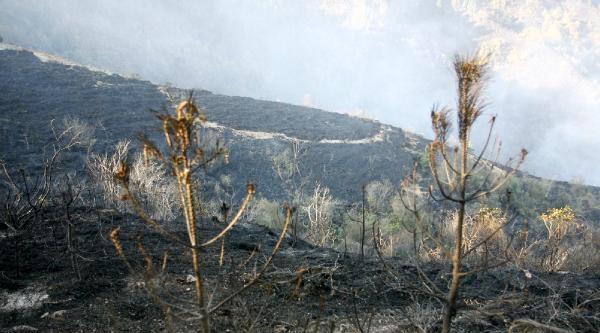 Rize'deki Orman Yangınında 70 Hektar Alan Kül Oldu