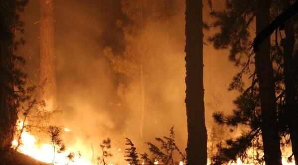 Saimbeyli'deki Orman Yangınında 170 Hektar Kızılçam Zarar Gördü