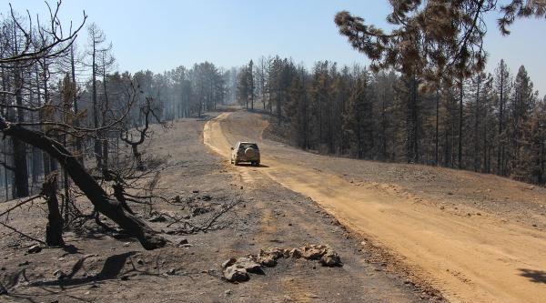 Saimbeyli'deki Orman Yangınında 170 Hektar Kızılçam Zarar Gördü (2)