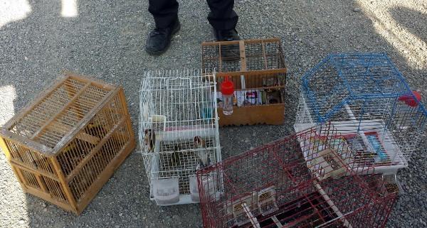 Saka Kuşu Avlayan 11 Avciya 53 Bin Lira Ceza