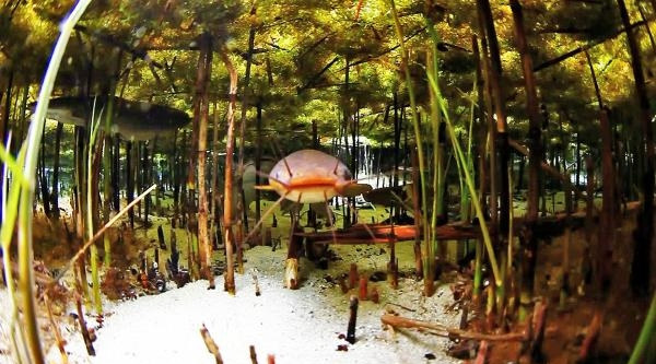 Sakarya'nın Doğduğu Yer Dalış Turizmine Açılıyor