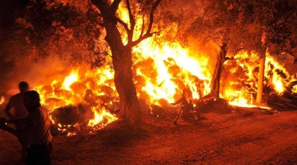 Samanlıkta Başlayan Yangın Zeytinliğe Sıçradı